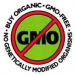 GMO, no